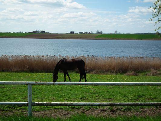 Witobelskie Lake (kon)