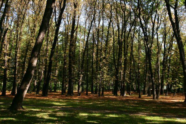 Siemianowice Śląskie - Park Miejski 01