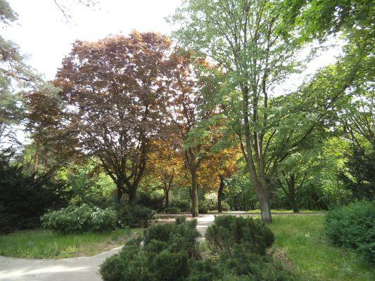 Park na Bydgoskim w Toruniu
