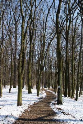 Toruń, park miejski zimą, ul. Szosa Bydgoska (1)