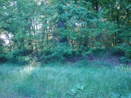 Former park in Wegrowo A224