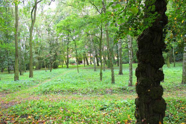 Zespól dworski (park)w Płowcach3 N. Chylińska