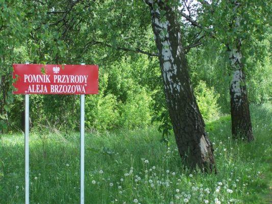 Pomnik Przyrody Aleja Brzozowa