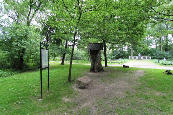 Dąb katyński przy cmentarzu Trzy Dęby w Pszczynie