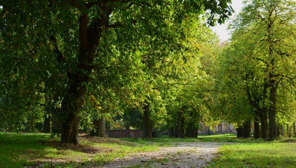 Niedźwiedź, park (WLZ14)