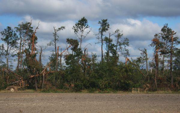 Koszęcin fragment lasu po tornadzie 2008