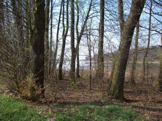 Jezioro Swiesz-widok z lasu od strony wsi Lubsin