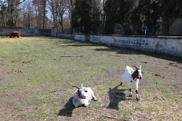 Kozy w mini zoo w Świerklańcu