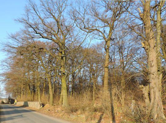 Sokoliniec park kz1