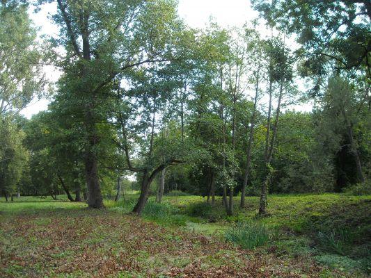 Park w Okuniewie