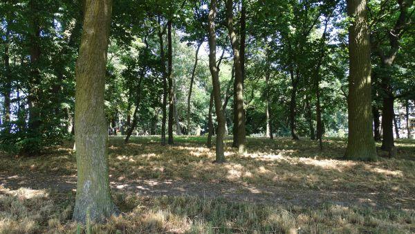 Park, poł. XIX Luszkówko (4)