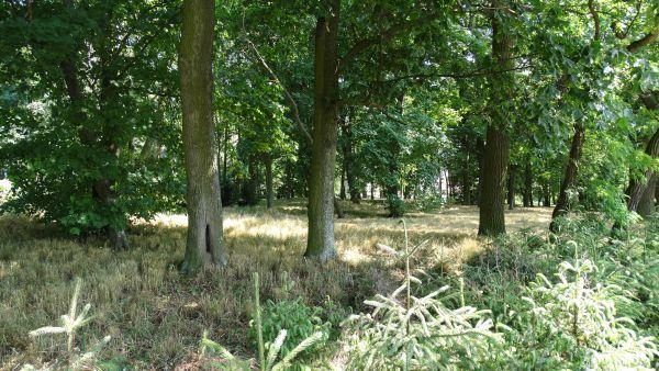 Park, poł. XIX Luszkówko (1)
