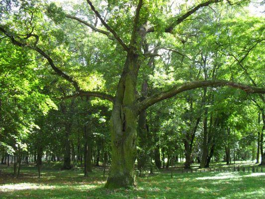 Park Luszkówko
