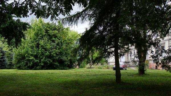 Pałac, 1876 Cerekwica park przy pałacu (3)