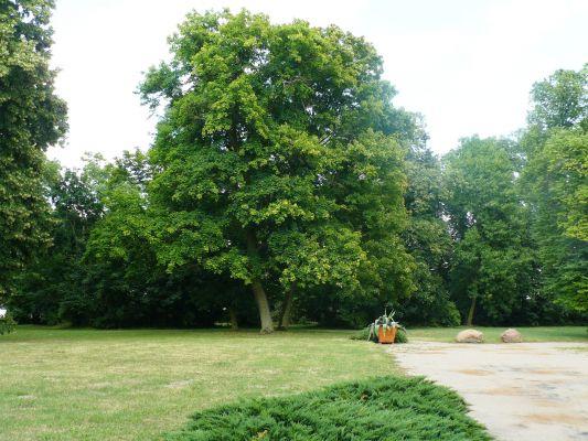 Grocholin, park, 1 poł. XIX ds