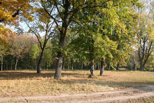 Jankowo park 2011 10 25 fot K Lewandowski 8456