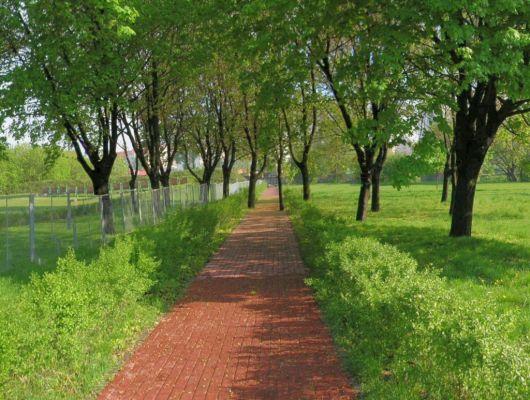 Park centralny 4