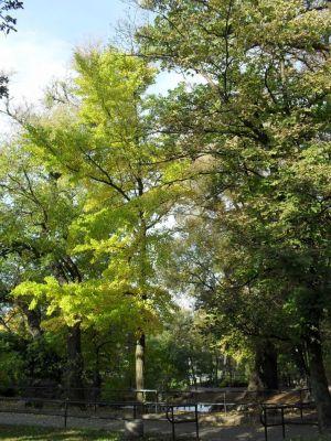 Milorzab dwuklapowy Bydgoszcz park Dabrowskiego