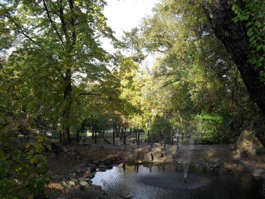 Staw gorny park Dabrowskiego Bydgoszcz