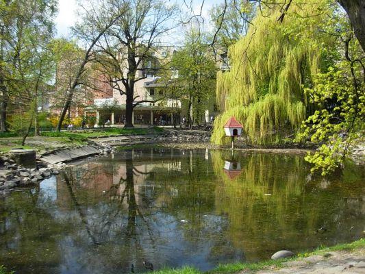 Park Kazimierza Wielkiego staw
