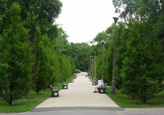 Park Ludowy w Bydg - alejka