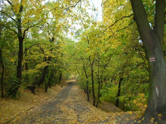 Park na Wzgórzu Wolności aleja jesień 2