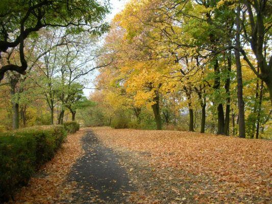 Park na Wzgórzu Wolności aleja jesień 1