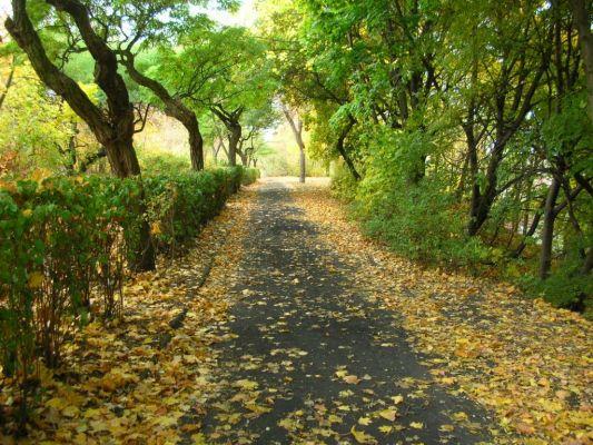 Park na Wzgórzu Wolności aleja jesień 4
