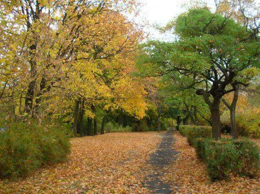Park na Wzgórzu Wolności aleja jesień 5