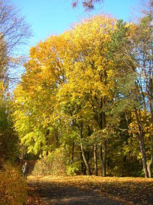 Park na Wzgórzu Wolności aleja jesień 8