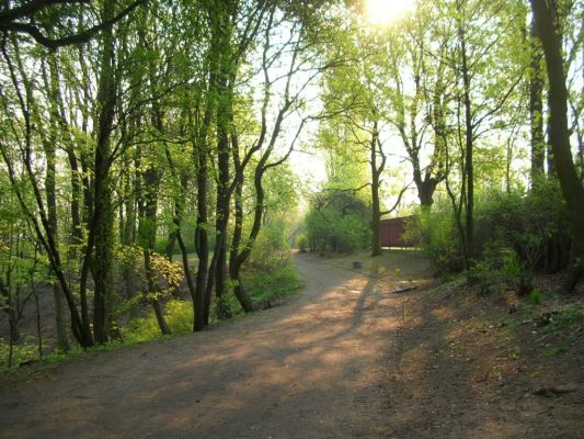 Park na Wzgórzu Wolności aleja wiosna 1
