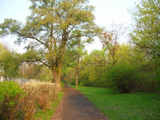 Park na Wzgórzu Wolności aleja wiosna 2