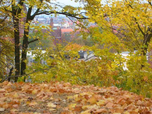 Park na Wzgórzu Wolności panorama jesien