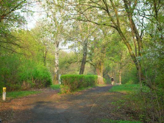 Park na Wzgórzu Wolności wiosna 2