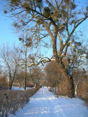 Park na Wzgórzu Wolności zima 12