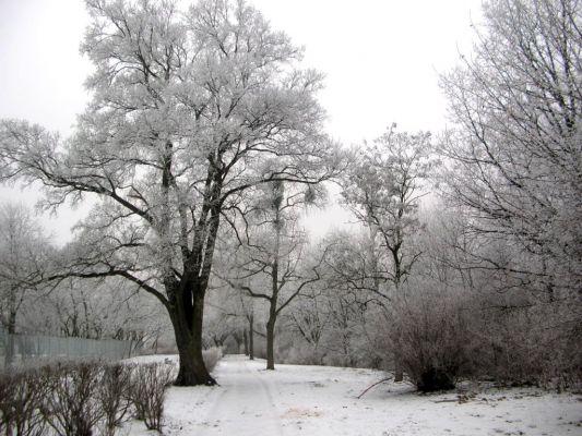 Park na Wzgórzu Wolności zima 4