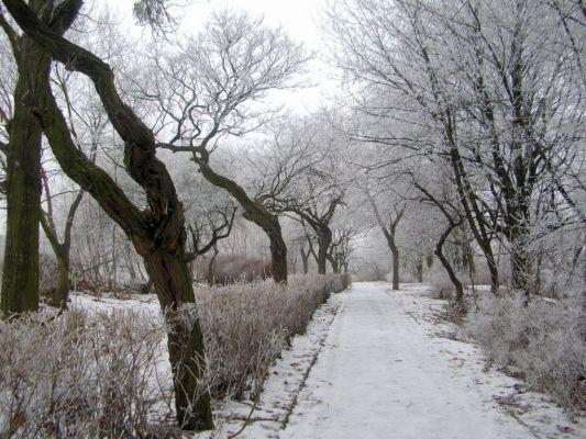 Park na Wzgórzu Wolności zima 6
