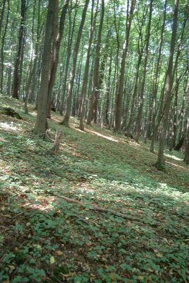 Poland Ostreznik reserve