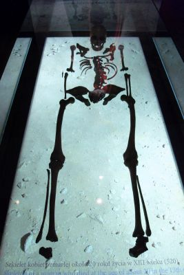 Gdańsk spichlerz Błękitny Baranek - szkielet kobiety zmarłej w XIII wieku