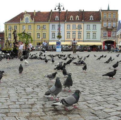 Stary Rynek - z gołębiami