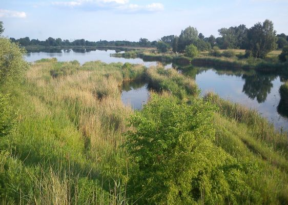 Baczkowski Pond. Poznan