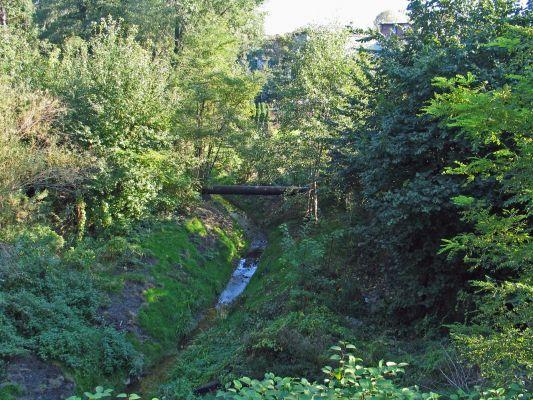 Dolina Ślepiotki widzana latem z mostu przy ul. Jankego