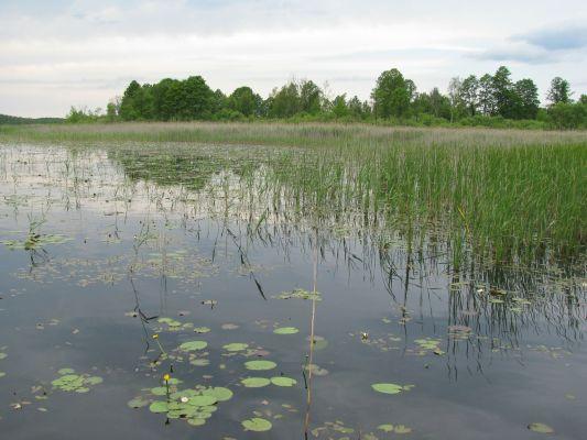 Jezioro Łukie w Poleskim Parku Narodowym