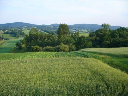 Łąki w Ryglicach