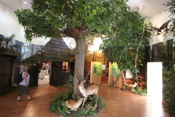 Pszczyna, Pokazowa Zagroda Żubrów, korytarz w muzeum