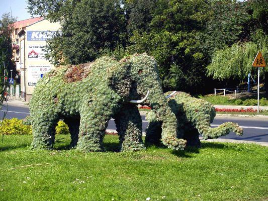 Przeworskie słonie