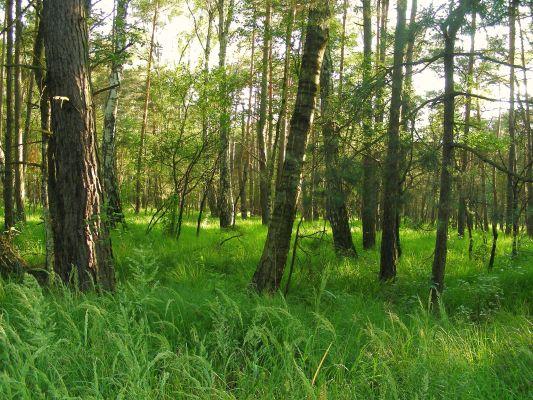 Rezerwat przyrody Prądy, gmina Dąbrowa