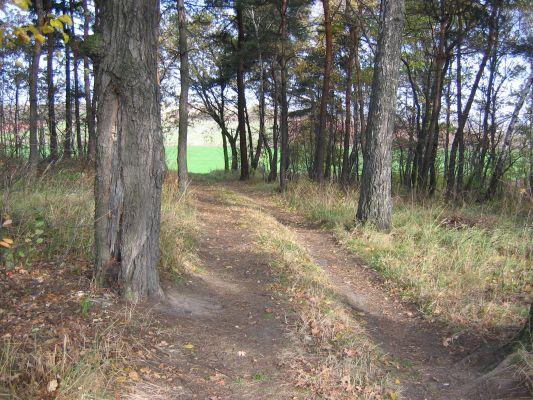 Lipka w Kozłowej Górze - górna część lasu przy obwodnicy