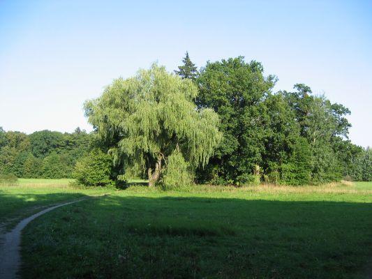 Pałac w Mosznej, drzewa porosłe wokół grobowców