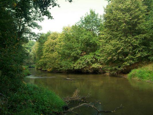 Rzeka Ruda w Rudach